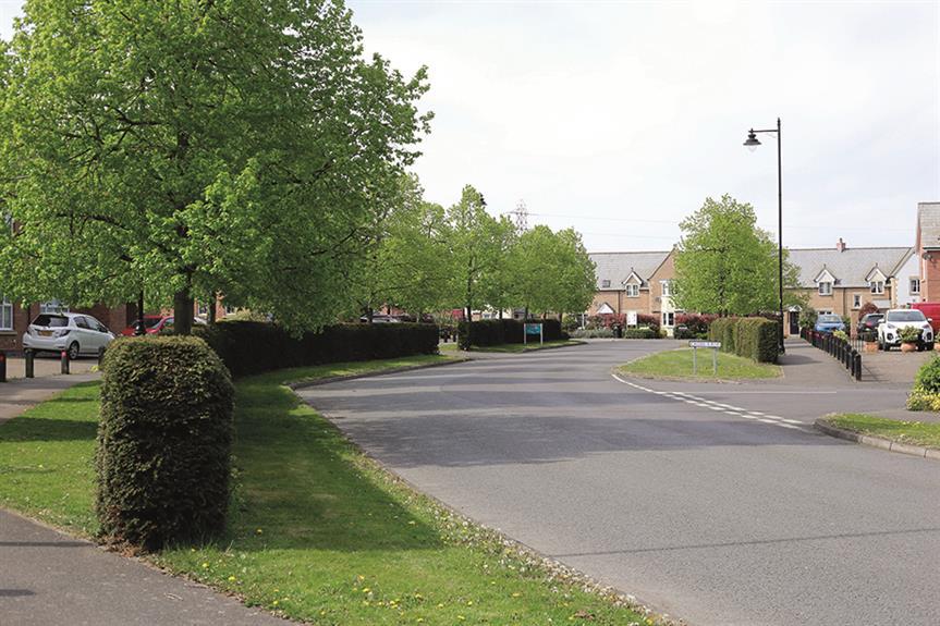 More Street Trees in South Kesteven